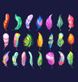 beauty feathers colored birds texturized soft vector image
