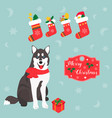 holiday husky christmas and new year background vector image vector image