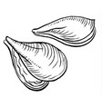oysters vector image