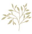 branch with leafs decorative icon vector image vector image