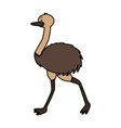 emu fauna on white background vector image vector image