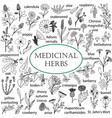 set of hand-drawn of medicinal herbs vector image