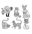 set of pedigree cats kittens collection icons of vector image