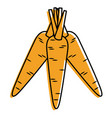 carrots vegetable fresh healthy food vector image