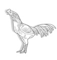 Drawing of Cock isolated on white background vector image