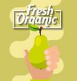 hand holding fresh organic fruit pear vector image