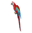 macaw parrot vector image