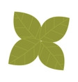 Fresh green lettuce salad leafs isolated on a vector image