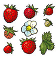 sketch wild strawberry set flowers with leaves vector image