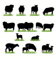 16 sheeps silhouettes set vector image vector image