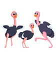 collection of the black ostrich vector image vector image