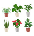 decorative plants home flowers in pots colorful vector image vector image