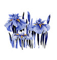hand drawn blue iris flowers on white background vector image vector image