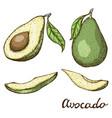hand drawn avocado set whole avocado sliced vector image