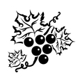 Grape Branch vector image