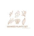 seaweed plants set underwater nature vector image vector image
