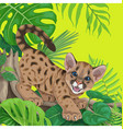 tropical background with angry cougar cub vector image vector image
