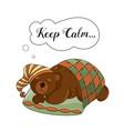 calm bear animal set vector image