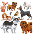 different types of dogs vector image vector image