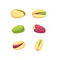 set pistachio nut in cartoon vector image vector image