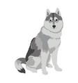 husky dog sitting isolated on white background vector image