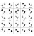 animals foot marks animal footprint paw vector image