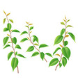 green branches with leaves isolated vector image