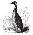 king penguin vintage vector image vector image