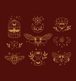 magical outline collection tribal symbols boho vector image