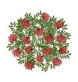 Rowan branch with berries frame for your design vector image