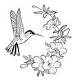 a hummingbird stylized vector image vector image