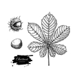 chestnut leaf and nuts drawing set Autumn vector image vector image