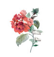red peanut flower peony isolated on white vector image vector image