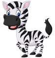 Cute baby zebra posing isolated vector image