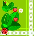 lace strawberry and ladybug vector image