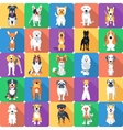 Seamless pattern with dogs flat design vector image