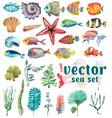 watercolor sea life seaweed shell fish sea vector image