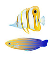 butterfly fish and blue striped tamarin wrasse vector image