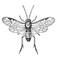 larch sawfly vintage vector image vector image