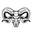 monochrome serious ram head vector image
