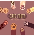 background with cats foots in cartoon style vector image vector image