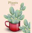 cactus plant growing in red pots vector image