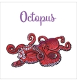 Drawing of octopus isolated on white background vector image vector image