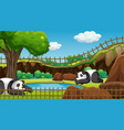 scene with two pandas in zoo vector image vector image