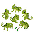 collection of the green chameleon vector image