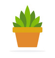 indoor green plant in a pot flat isolated vector image vector image