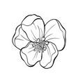 japanese apple tree flower head contour drawing