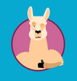 lama alpaca thumbs up and winks emoji animal vector image vector image