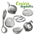 Onion vegetable set hand drawn vector image