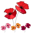 Stylized cute red poppy isolated on white vector image vector image